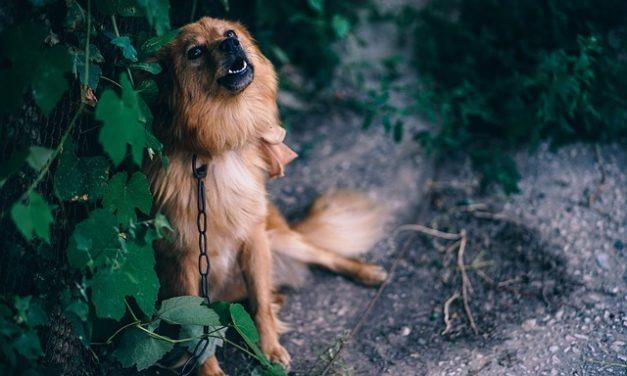 Calcolare gli anni del cane: come funziona