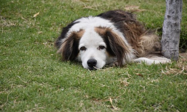 Come sentono i cani?
