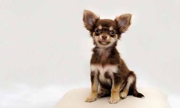 Giardia nei cani: come prendersi cura del tuo cane in modo corretto