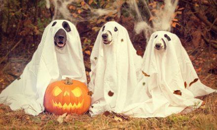 Halloween: zucca creepy scultura raccapricciante