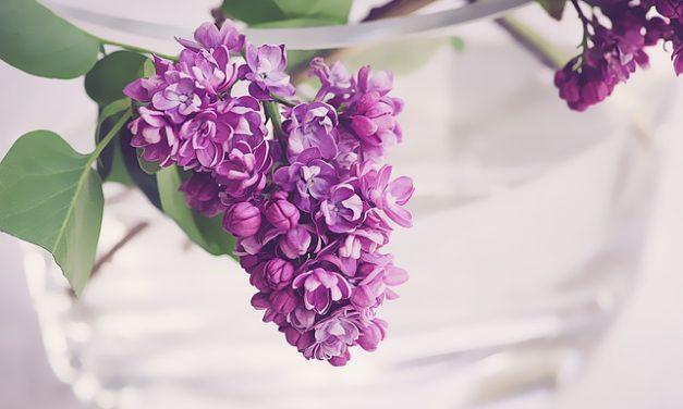 Lilla in vaso: per rimanere fresco a lungo