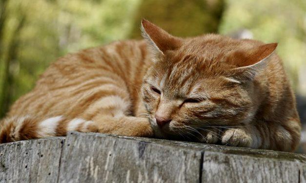 Perché sbavate nel sonno? Una spiegazione plausibile