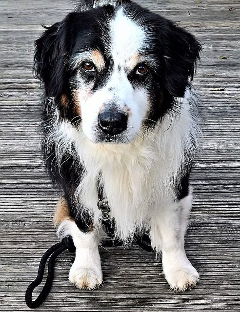Cacciapiatti nei cani: cosa fare?