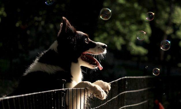 Cani con collare GPS: ecco come trovare rapidamente il tuo quadrupede in esecuzione
