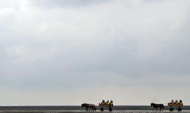 Cavalli Frisoni Bianchi: Vale la pena conoscere queste poche eccezioni