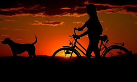Cosa fare contro la cistite? Come aiutare il tuo cane