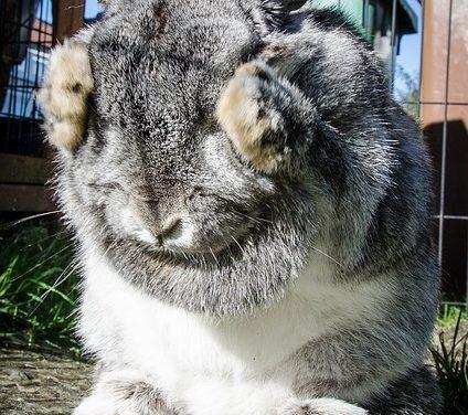 Costruire la propria gabbia di coniglio: istruzioni per una gabbia interna