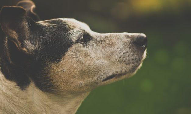 Cucire il proprio cappotto per cani: Istruzioni