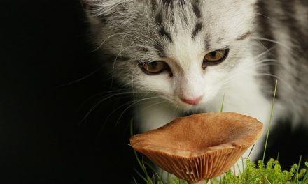 Fungo di gatto: cosa fare?