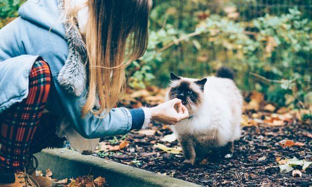 Gatto vomiti dopo aver mangiato: si dovrebbe prestare attenzione a che