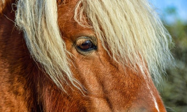 Pony up: istruzioni per parrucchiere