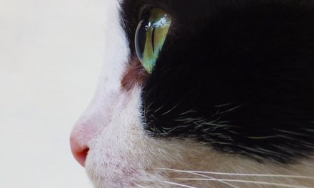 Tagliare gli artigli dei gatti: è così che lo si gestisce
