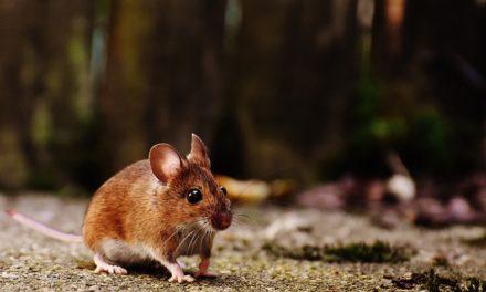 Windows 7: Impostazione della sensibilità del mouse: ecco come funziona