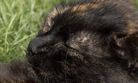 Quando i gatti sono sessualmente maturi? Come trovare le risposte alle domande del tuo animale domestico