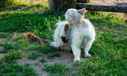 Allergia alla magra nei gatti: questo è quello che puoi fare