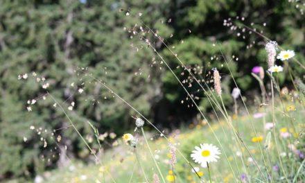 Capelli: cura con prodotti naturali a destra