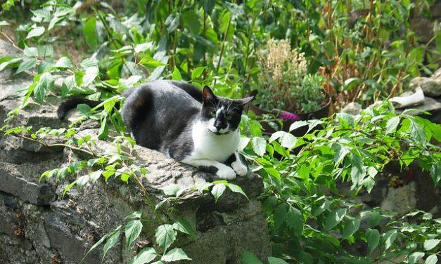 Cat fuori dalla finestra: cosa fare?