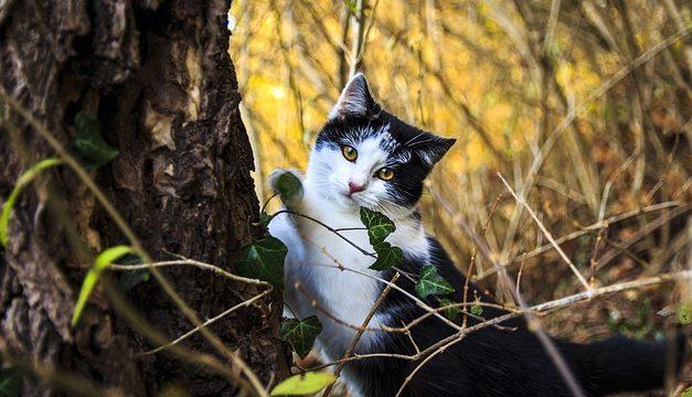 Il gatto strappa la sua pelliccia: cause e misure