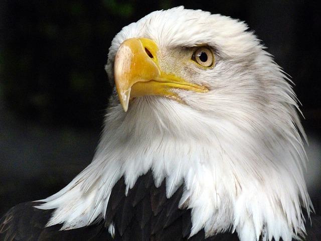 Pappagallini ninfe: idee per giochi e attività per i pappagalli piccoli