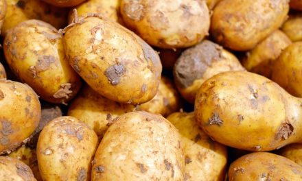 Patate per conigli: come nutrire correttamente gli animali domestici