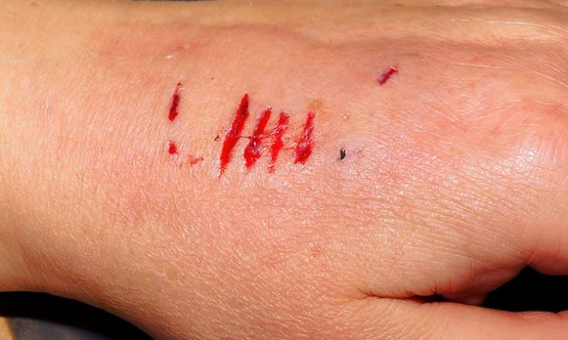 Cane ha eruzione cutanea – come interpretare i sintomi