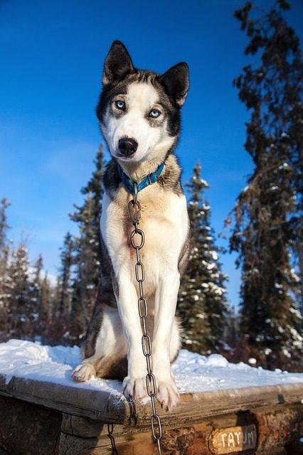 Caniera per cani: determinare la taglia corretta