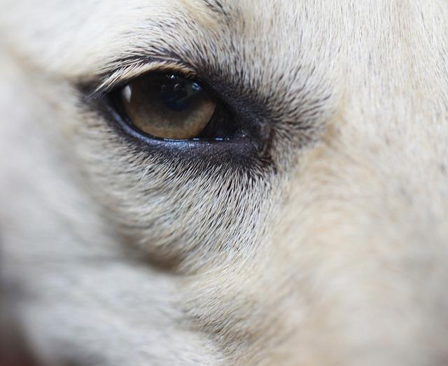 Forfora di cane: cosa si può fare