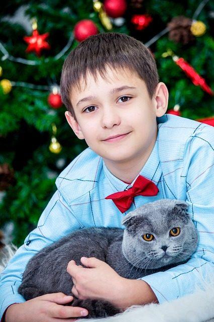 Gatti e Capodanno: così è possibile risparmiare lo stress della tigre domestica