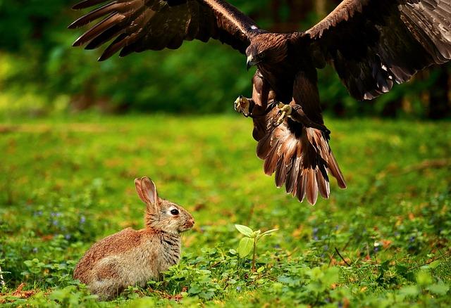 Parlare agli uccelli: come insegnare loro parole