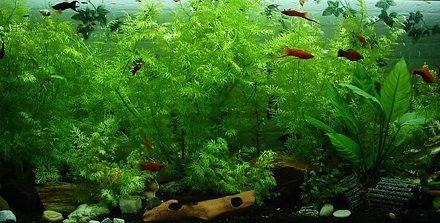 Pesci neon: come tenerli adatti alle specie