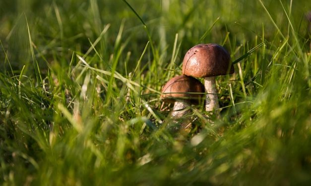 Quanti funghi posso raccogliere? Cosa dovresti considerare
