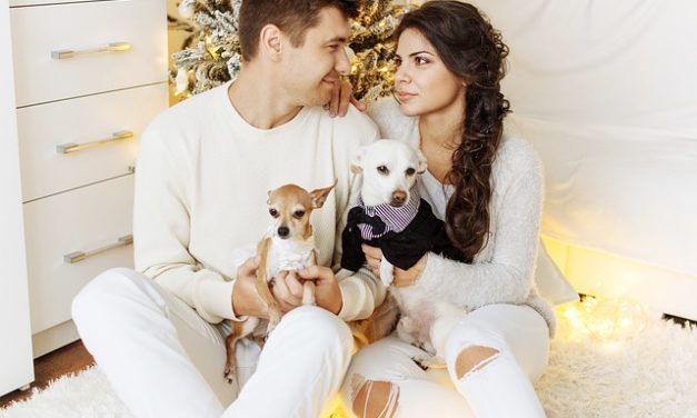 """""""La notte di Capodanno sedativi per cani""""? Come aiutare gli animali da compagnia spaventati"""