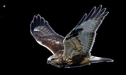 Acquistare una cappa di falco: si dovrebbe essere consapevoli di ciò