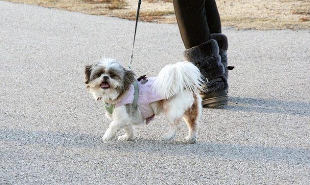 Contratto di protezione dei cani: cosa fare attenzione quando si acquista un cane