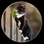 Costruire e allestire un recinto per gatti: è così che funziona