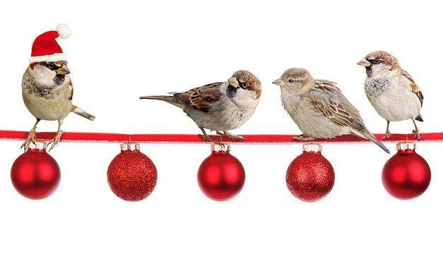 Mantenere i pappagalli nani: bisogna fare attenzione a che