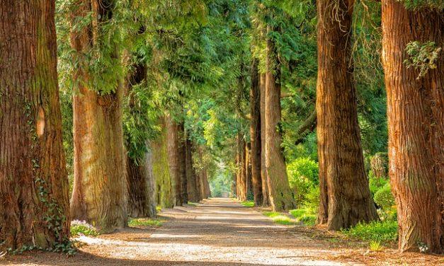Sale di Epsom nel giardino: è così che l'esperto nutre le conifere