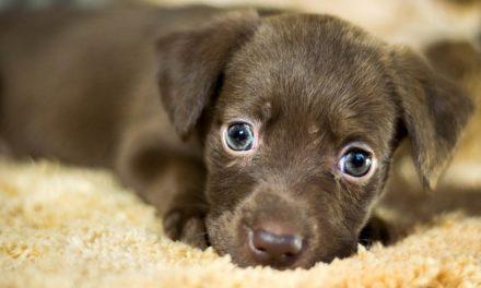 Sgocciolamento cucciolo: cosa fare?