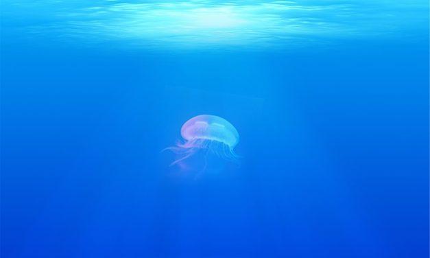 Conservare le meduse nell'acquario