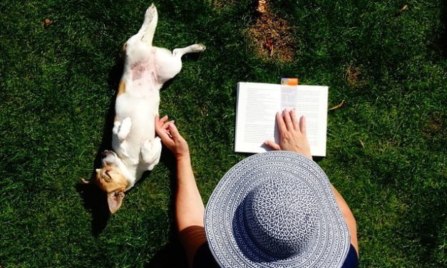 Determinazione della razza cane: come riuscire