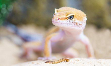 Lizard Hill: Informazioni