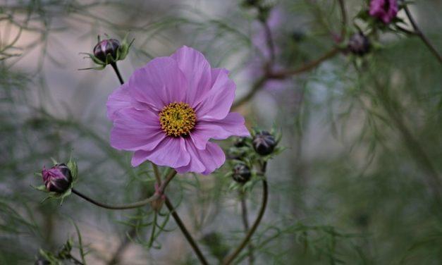 Rifinire fiore Passione