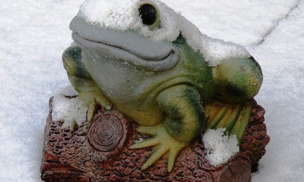 Toad food: è così che gli animali si nutrono in inverno