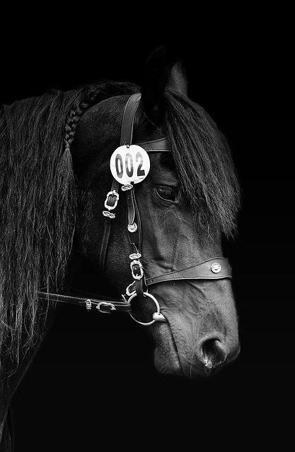 Equitazione a cavallo: ecco come allentare il cavallo in avanti e indietro