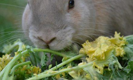Fare il proprio cibo di coniglio: ecco come funziona