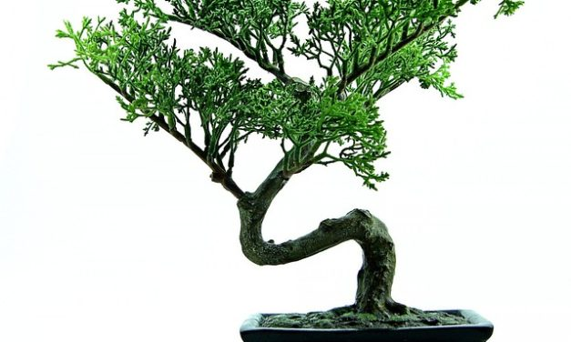 Fare un bonsai da soli: come può funzionare