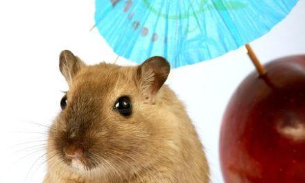 Peste di topo nel giardino: cosa fare?