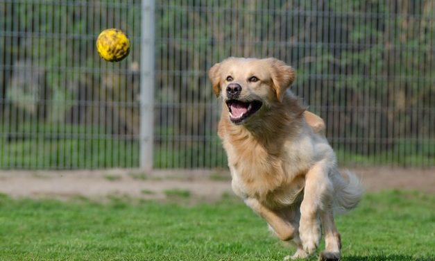 Allenamento cani: come divertirsi con piccoli trucchi