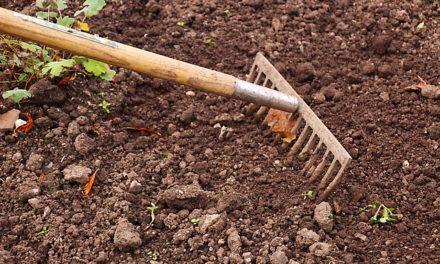 Piantare la copertura del terreno su un pendio: consigli utili