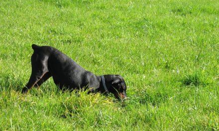 Aiutare il cane a liberarsi dallo scavo: come salvare il letto di fiori